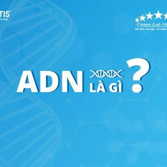 ADN là gì?