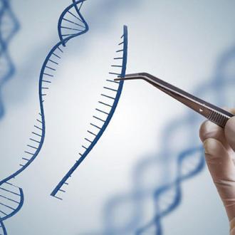 Xét nghiệm ADN làm giấy khai sinh cho con có khó không?