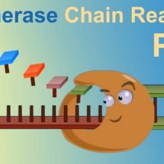 Xét nghiệm PCR đo tải lượng virus viêm gan B